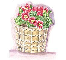 Jar primrose Photographic Print