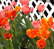 Tulips in Telford by denisedkane