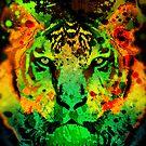 Tiger by Mark Devas