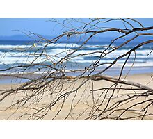 shell tree Photographic Print