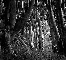 Forest Highlight - Isle of Mull by ExclusivelyMono