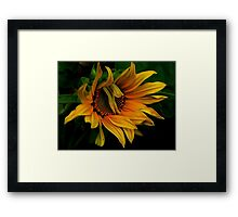 I Need A Comb ! Framed Print
