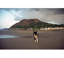 Evening at the beach with Indy! Photographic Print