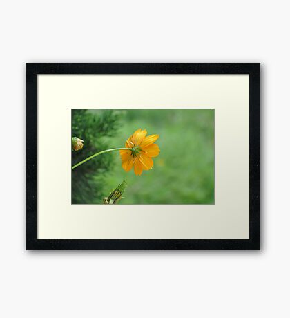 Can you scratch my back please. Framed Print