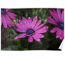 Wet Flowers Poster