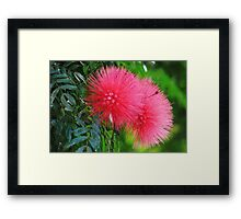 Pink Fuzzy Framed Print