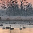 - Canada Geese on a cold March morning by Christopher Cullen