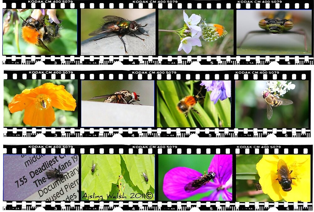 BUG FILM STRIP by Aisling Walsh
