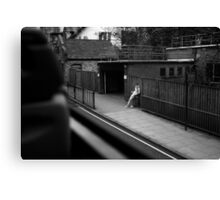 LONDON: VIEWS FROM THE TOP DECK PT 2 'THE STAND UP' Canvas Print