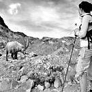 Encounter in the wild by neil harrison