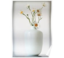 Daisies in a white vase Poster