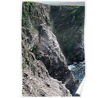 Shetland Seabirds Poster