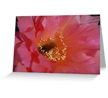 Echinopsis Up Close Greeting Card