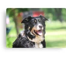 Pup, our  Australian Shepherd  Metal Print