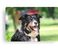 Pup, our  Australian Shepherd  Canvas Print