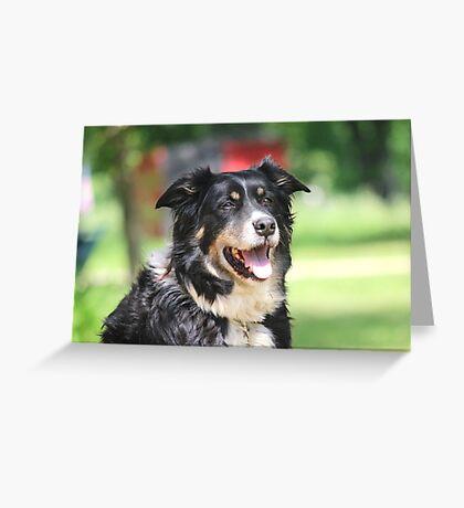 Pup, our  Australian Shepherd  Greeting Card