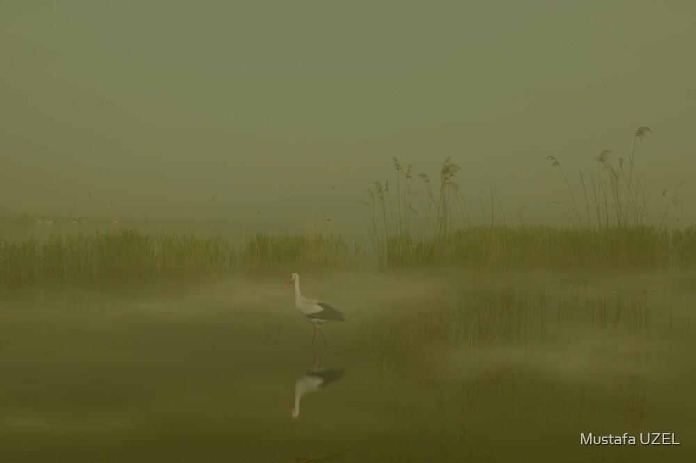 stork on foggy lake by Mustafa UZEL