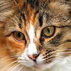 Willow - Calico Cat by Laurast