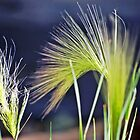 Macro Foxtail by Laurast