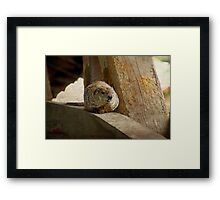 How much wood would a woodchuck chuck if a woodchuck could chuck wood? Framed Print