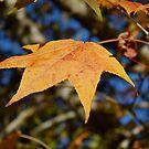 Autumn Color. by Gabrielle  Hope