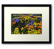 Fields of Brightly Colored Pansies Framed Print