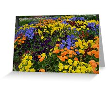 Fields of Brightly Colored Pansies Greeting Card
