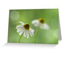 Chamomile duo Greeting Card