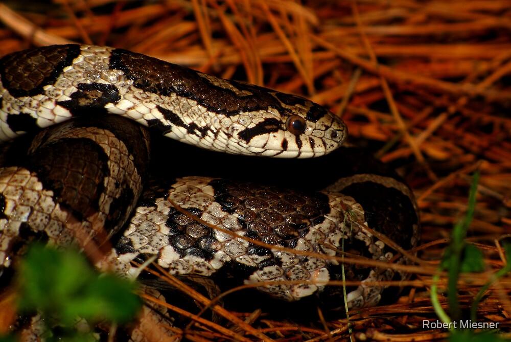 Eastern Milk Snake Closeup by Robert Miesner