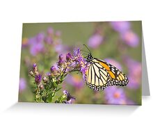 Soca Butterfly Greeting Card