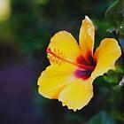 _el jardín de Epicuro [las horas paganas XIV] by Justo Morales