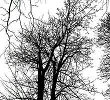 Tree Graphic by Orla Cahill Photography