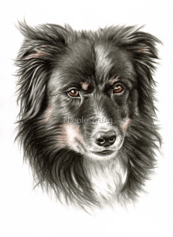 Border Collie Dooley by Nicole Zeug