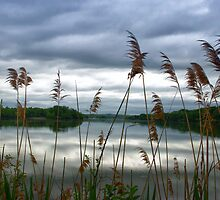In The Weeds by barkeypf
