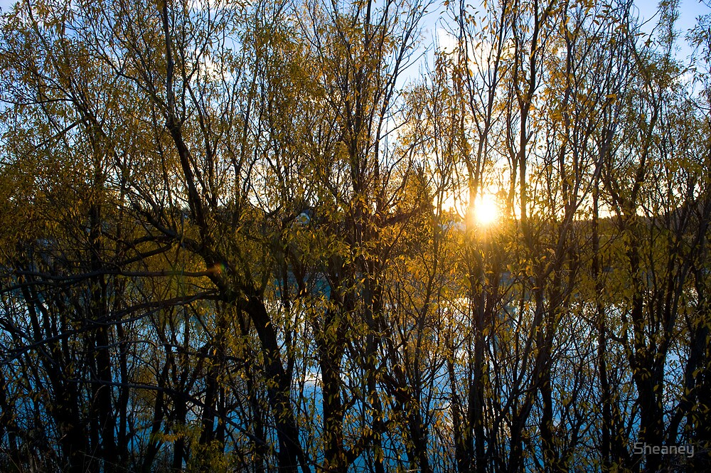 Autumness by Sheaney