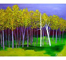 Landscape Color Photographic Print