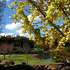 Ginko, Japanese gardens, Toowoomba by Marilyn Baldey