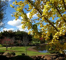 Ginko, Japanese gardens, Toowoomba by Marilyn Baldey