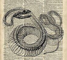 Boa Snake Skeleton Vintage Illustration by DictionaryArt