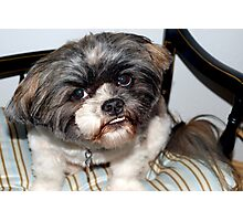 Chewie's pet dog Photographic Print