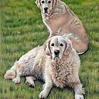 Two Golden Retriever by Nicole Zeug