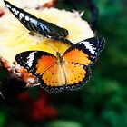 Orange butterfly by papillonphoto