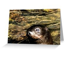 New Zealand Fur Seal Pup Greeting Card