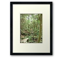lush green jungle forest Framed Print