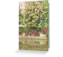 majestic trees with attractive white blossoms Greeting Card