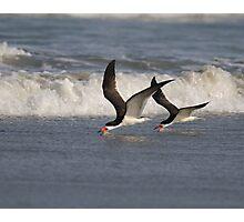 Black Skimmers Skimming Photographic Print
