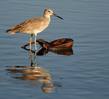 Willet Reflection by Tom Dunkerton