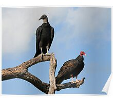 Two Vultures Poster