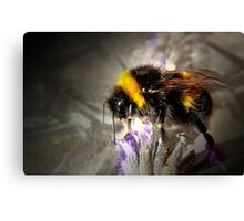 Just Bumble Canvas Print