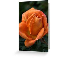 Rose of  Orange Greeting Card